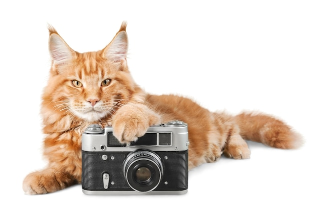 Entzückende rote katze isoliert mit kamera auf weißem hintergrund