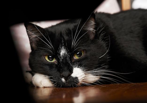 Entzückende schwarze katze mit grünen augen, die auf dem bett sitzen