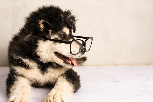 Entzückende tragende brillen des welpen