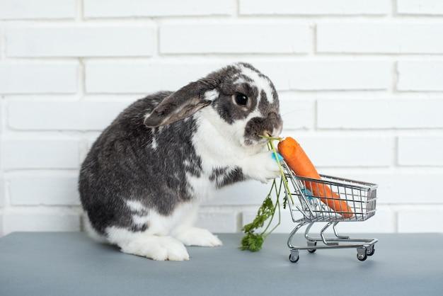 Entzückender flauschiger hase, der frische karotte vom spielzeug-einkaufswagen gegen weiße backsteinmauer isst
