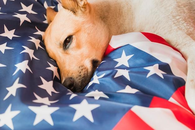 Entzückender hund auf amerikanischer flagge