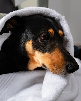 Entzückender hund bedeckt mit handtuch
