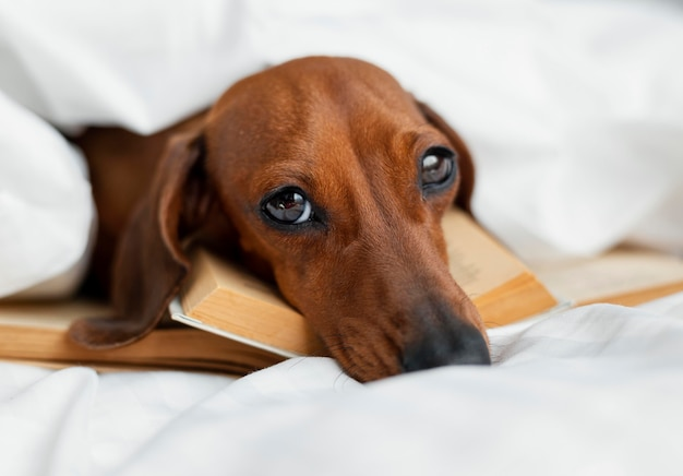 Entzückender hund, der auf bücher legt