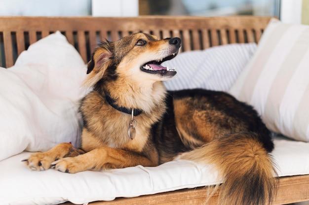 Entzückender hund, der besitzer sucht