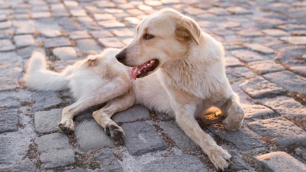 Entzückender hund, der draußen auf pflaster sitzt