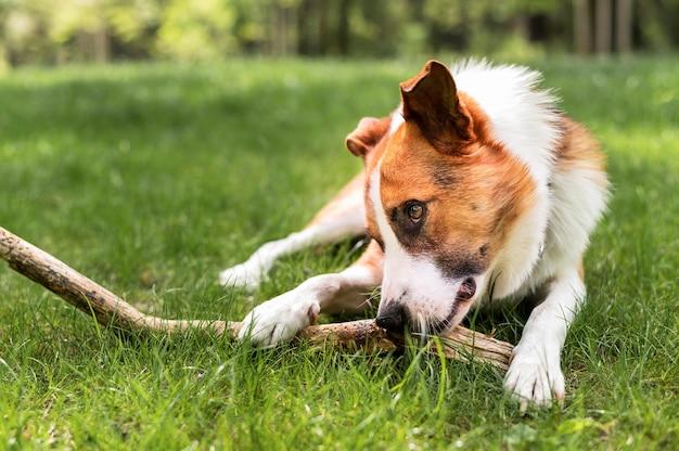 Entzückender hund, der im park spielt