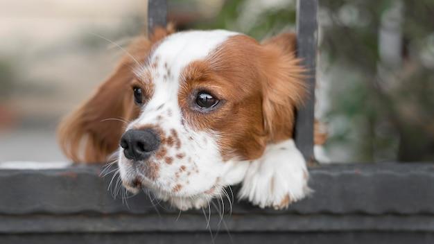 Entzückender hund, der kopf durch zaun draußen steckt
