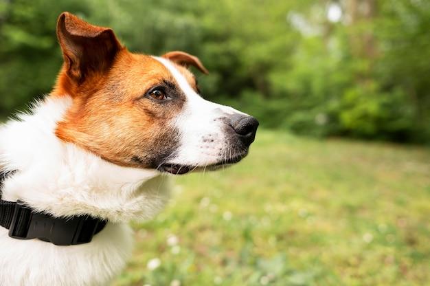 Entzückender hund der nahaufnahme, der spaziergang im park genießt
