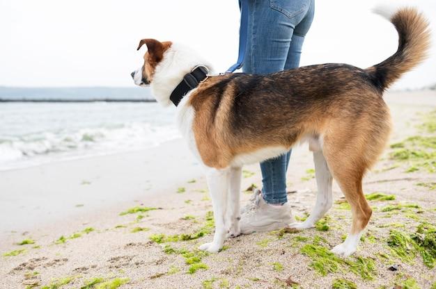 Entzückender hund, der spaziergang in der natur genießt