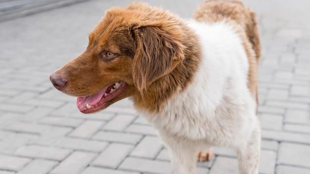 Entzückender hund im schutz draußen, der darauf wartet, adoptiert zu werden