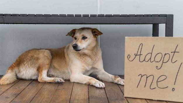 Entzückender hund im tierheim sitzt neben, um mich zeichen zu adoptieren