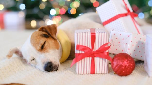 Entzückender hund mit geschenken weihnachten zu hause feiernd.