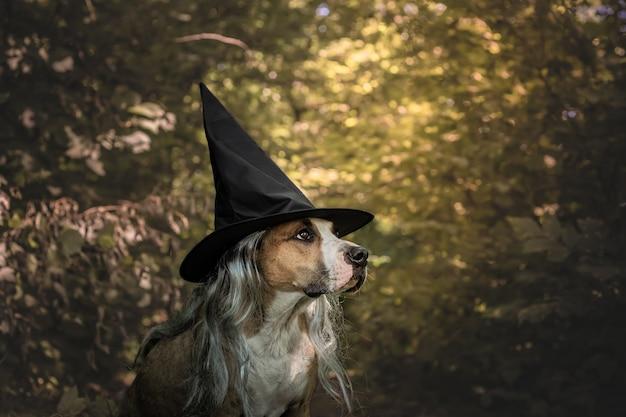 Entzückender hund verkleidet für halloween als freundliche waldhexe. netter staffordshire terrier im kostüm des hutes und des grauen haares im natürlichen herbstwaldhintergrund