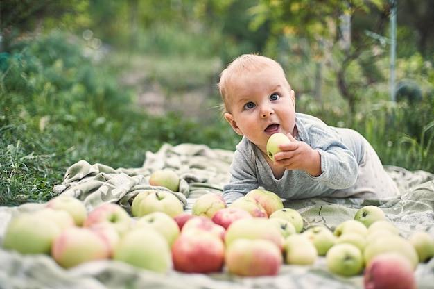 Entzückender junge, der apfel isst, der im garten spielt. kind, das spaß am familienpicknick im sommergarten hat. kinder essen obst. gesunde ernährung für kleines kind. kind mit äpfeln