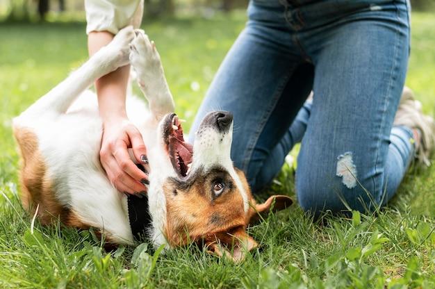 Entzückender kleiner hund, der genießt, mit besitzer zu spielen