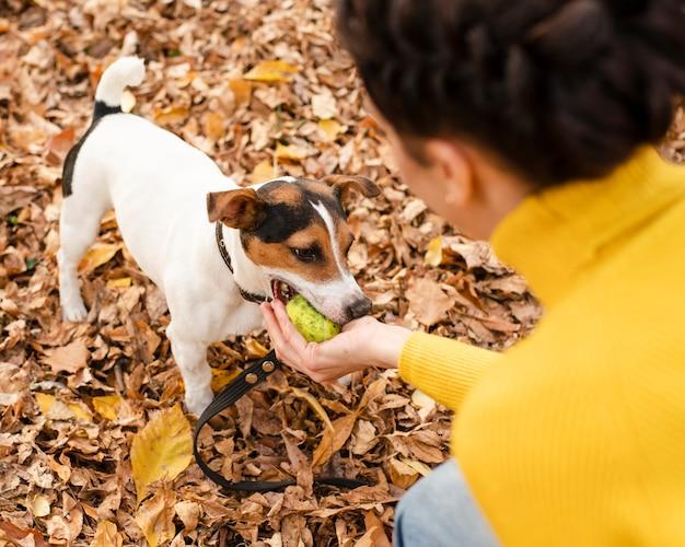 Entzückender kleiner hund, der im park spielt