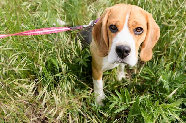 Entzückender kleiner hund, der spaziergang im park genießt