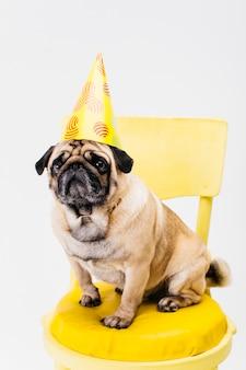 Entzückender kleiner hund im geburtstagshut, der auf stuhl sitzt