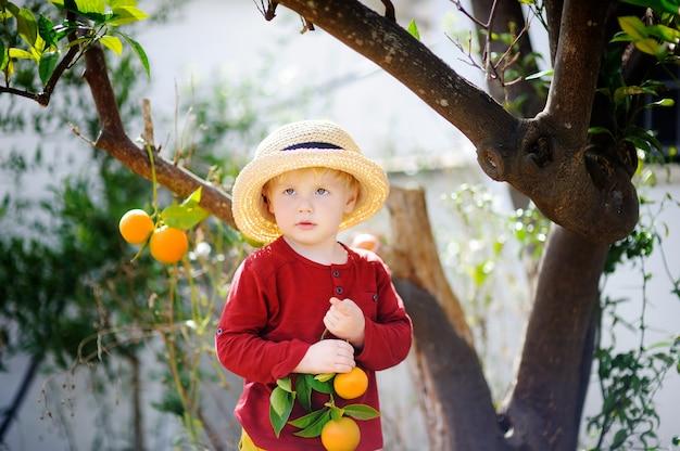 Entzückender kleiner junge im strohhut, der frische reife tangerine im sonnigen tangerinebaumgarten in italien auswählt. kleiner landwirt, der im obstgarten arbeitet