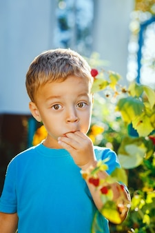 Entzückender kleiner junge isst himbeeren
