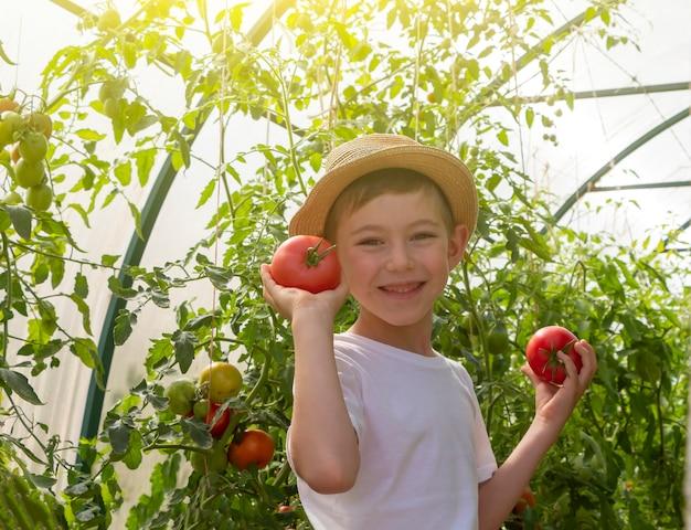 Entzückender kleiner kinderjunge im strohhut halten tomaten im gewächshaus. kindergartenarbeit und ernte. konzept von gesundem bio-gemüse für kinder. vegetarismus für kinder