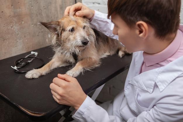 Entzückender mischlingsrettungshund, der den tierarzt während der medizinischen untersuchung betrachtet