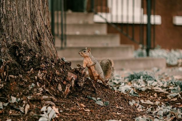 Entzückender ordentlicher großer baum des braunen eichhörnchens