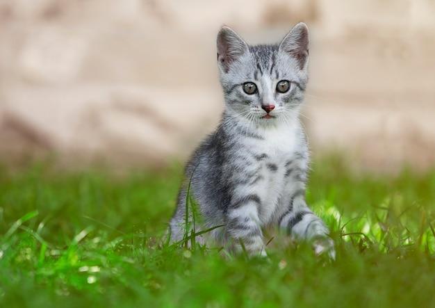 Entzückendes abgestreiftes kätzchen, das outdors sitzt
