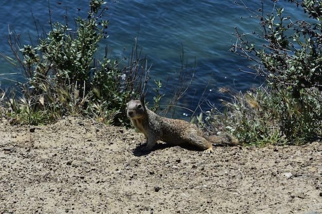 Entzückendes eichhörnchen, das auf felsen am rand des ozeans sitzt.
