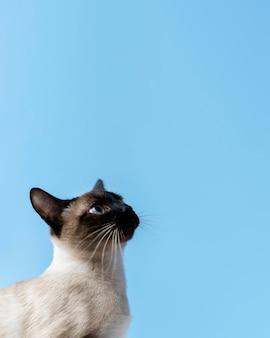 Entzückendes kätzchen mit monochromer wand hinter ihr