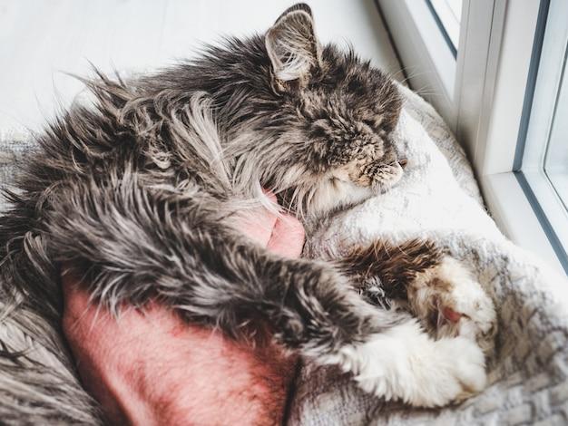 Entzückendes kätzchen und männliche hand. nahansicht