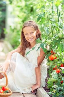 Entzückendes kleines mädchen, das gurken und tomaten im gewächshaus erntet.