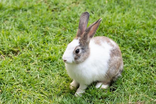 Entzückendes nettes kaninchen, das auf grünem gras sitzt. kleines kaninchen im garten knifflig