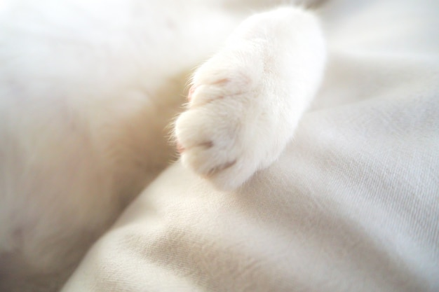 Entzückendes reizendes haustier der weißen katzentatze im feiertags-ideenhintergrund des weichen gefühls des betts
