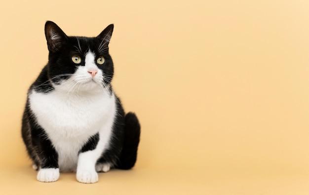Entzückendes schwarz-weiß-kätzchen mit monochromer wand hinter ihr