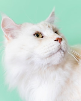 Entzückendes weißes kätzchen mit monochromer wand hinter ihr