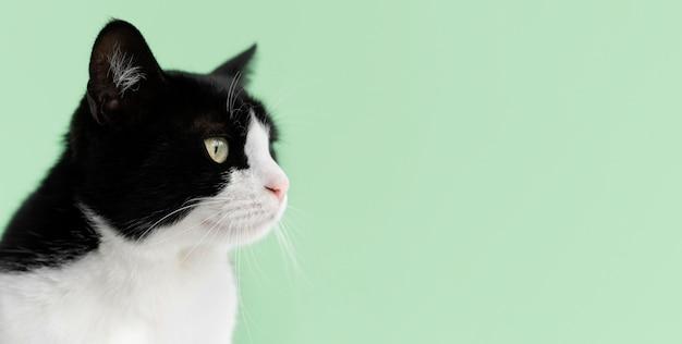 Entzückendes weißes und schwarzes kätzchen mit monochromer wand hinter ihr