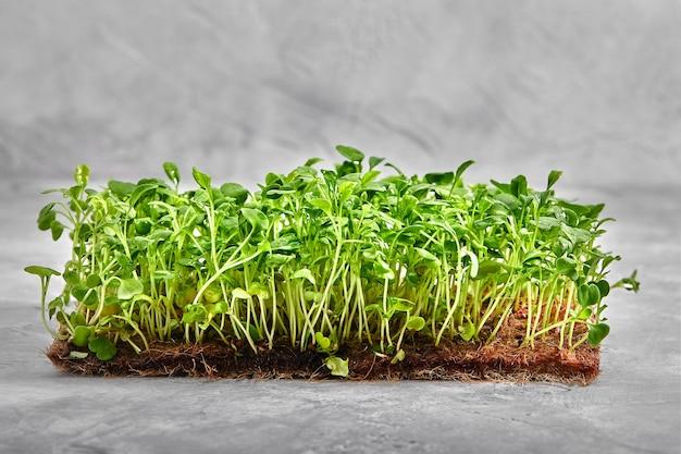 Erbsen-mikrogrün mit samen und wurzeln, aus denen mikrogrüns auf jute-mikrogrüns wachsen, wachsen matten