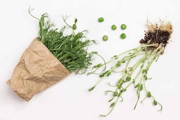Erbsensprossen mit wurzeln und erde. geschnittene grüne erbsensprossen werden in papier eingewickelt. weißer hintergrund. draufsicht