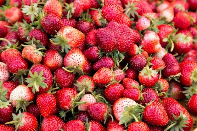 Erdbeerbeeren frisch vom baum.