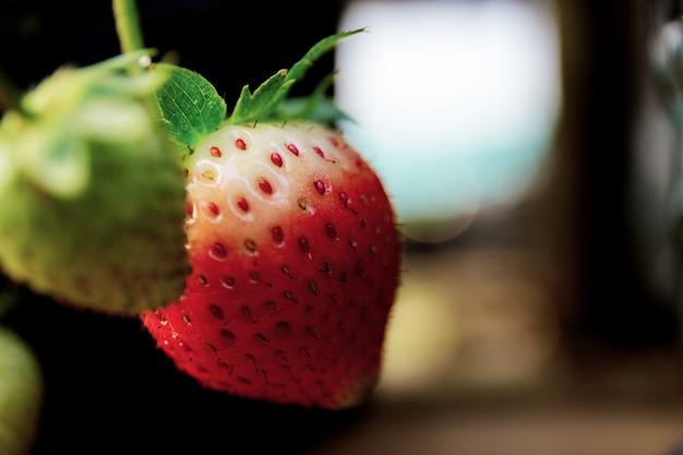 Erdbeere bei sonnenaufgang