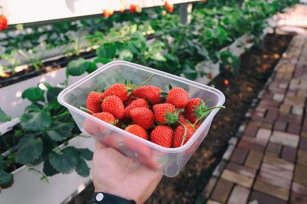 Erdbeere holen