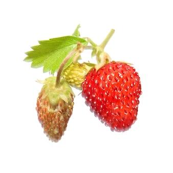 Erdbeere mit grünem blatt lokalisiert auf weiß