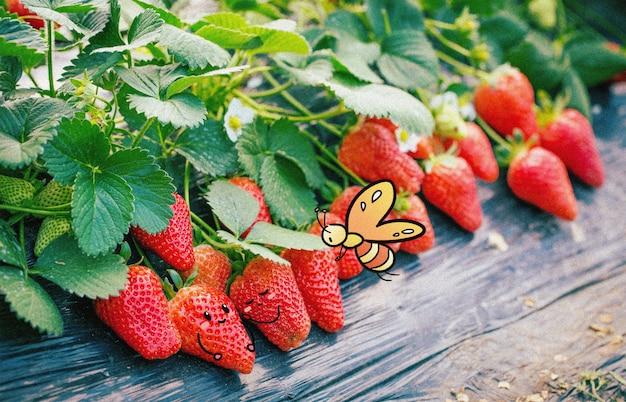 Erdbeere und kleiner schmetterling