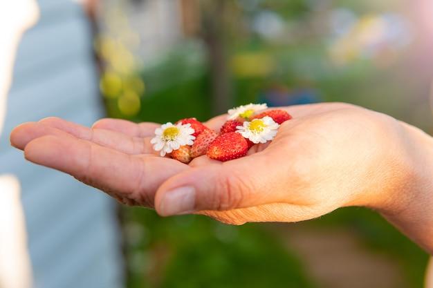 Erdbeeren auf der handpalme mit blumen im garten