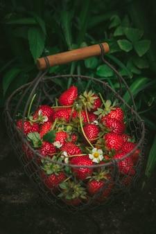 Erdbeeren im metallkorb
