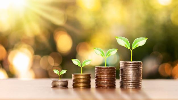 Erfolgreiches finanz- und investitionskonzept mit bäumen, die auf münzen und unscharfem grünem naturhintergrund wachsen.