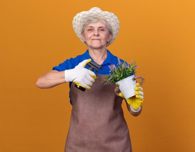 Erfreuliche ältere gärtnerin, die gartenhut und handschuhe trägt, die sprühflasche und blumentopf auf orange halten