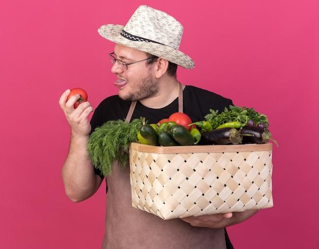 Erfreulicher junger männlicher gärtner, der gartenhut trägt, der gemüsekorb hält und tomaten in seiner hand lokalisiert auf rosa wand betrachtet