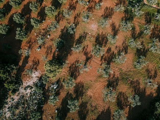 Erhöhte ansicht der bäume, die auf land wachsen